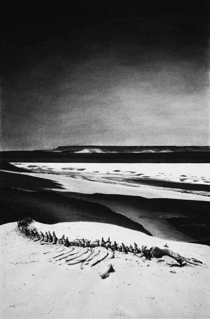 Archéocètes 03 – 2019 Dessin à la pierre noire. 71 x 48 cm © Mathieu Dufois